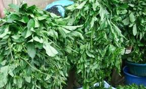 Ugu vegetable